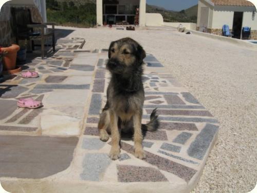 Massie, mediano 2 años. Lo encontraron en la calle. Alicante A_2111278091777