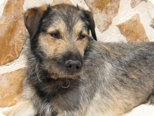 Massie, mediano 2 años. Lo encontraron en la calle. Alicante A_2111278091783