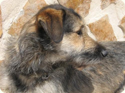 Massie, mediano 2 años. Lo encontraron en la calle. Alicante A_2111278091791