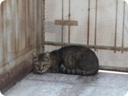 RONA, gata viejecita sorda. Vive en la calle y necesita un hogar donde vivir sus últimos años A_2841283965898