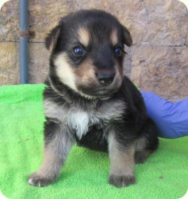 Duque perro adoptado bamb difunde - Comida para cachorros de un mes ...