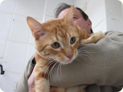 TOM y BETTY, gatos naranjas de 2 años. Su dueño los ha abandonado. Alicante. ADOPTADOS! A_4371299169354
