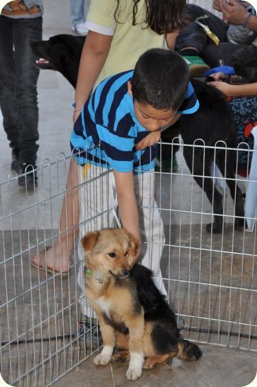 CHIQUI, cachorrita peque 5 meses, mini pastor aleman. ALICANTE A_4481302676785