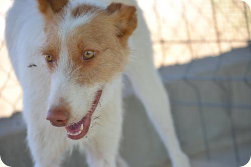 http://adoptamics.org/imas/animales/_576/a_5761311071404.jpg