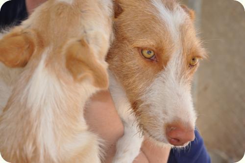 http://adoptamics.org/imas/animales/_576/a_5761312298299.jpg