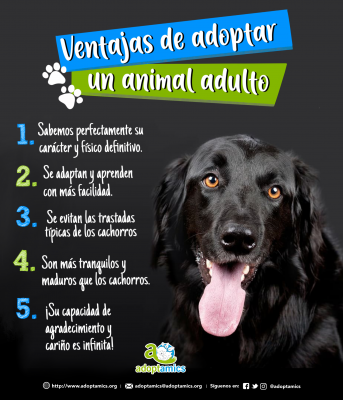 Ventajas de adoptar un animal adulto